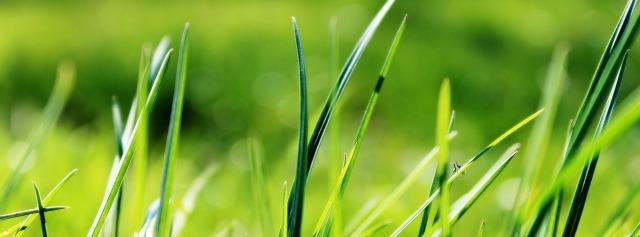 grass-724014_1920